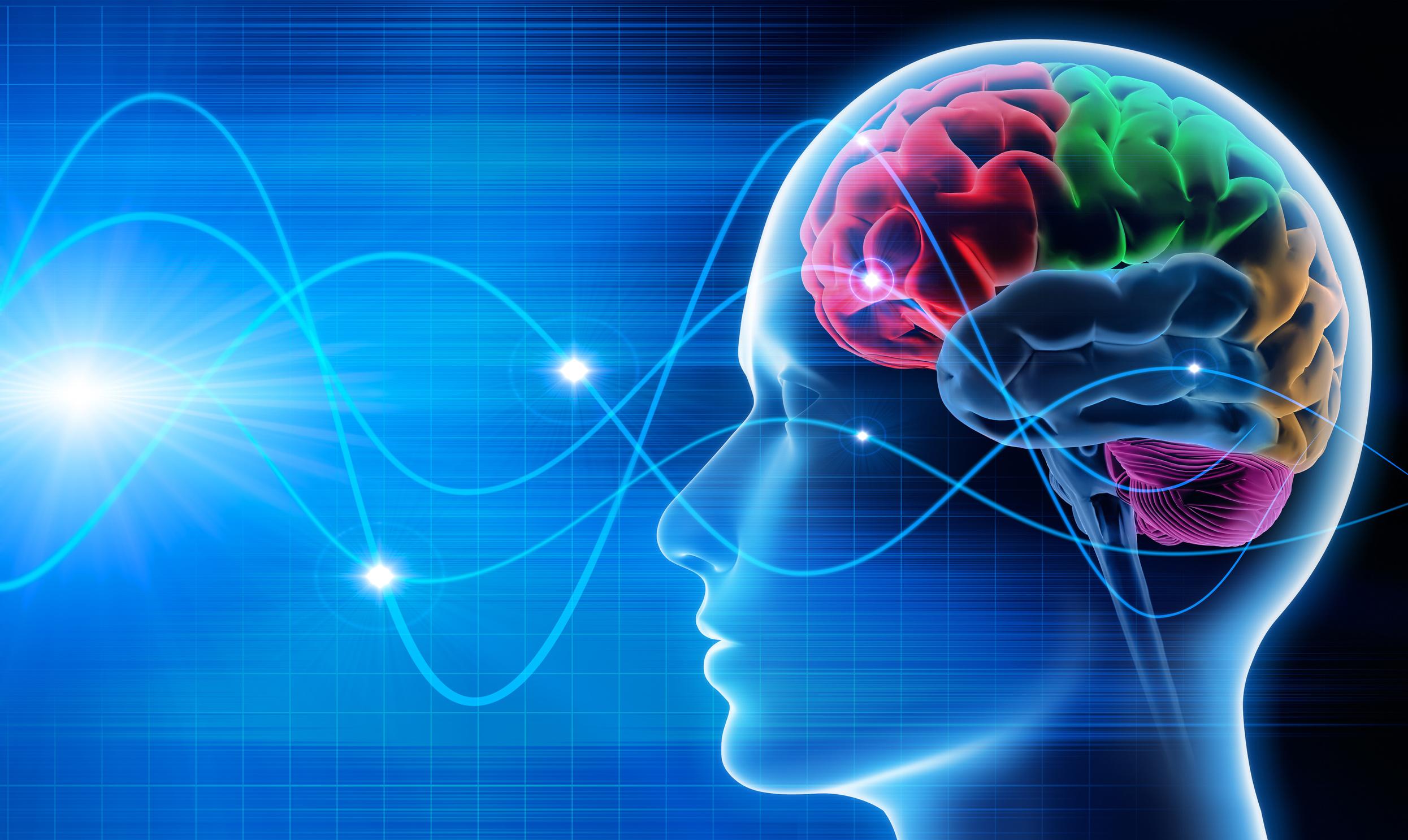 Gehirn – Schwingungen 1